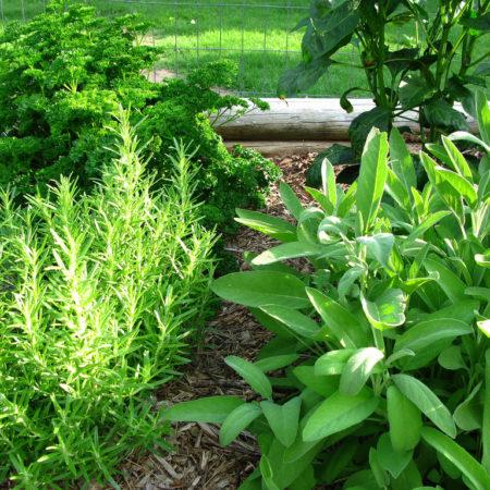 Αρτυματικά Φυτά (Βότανα Μαγειρικής)