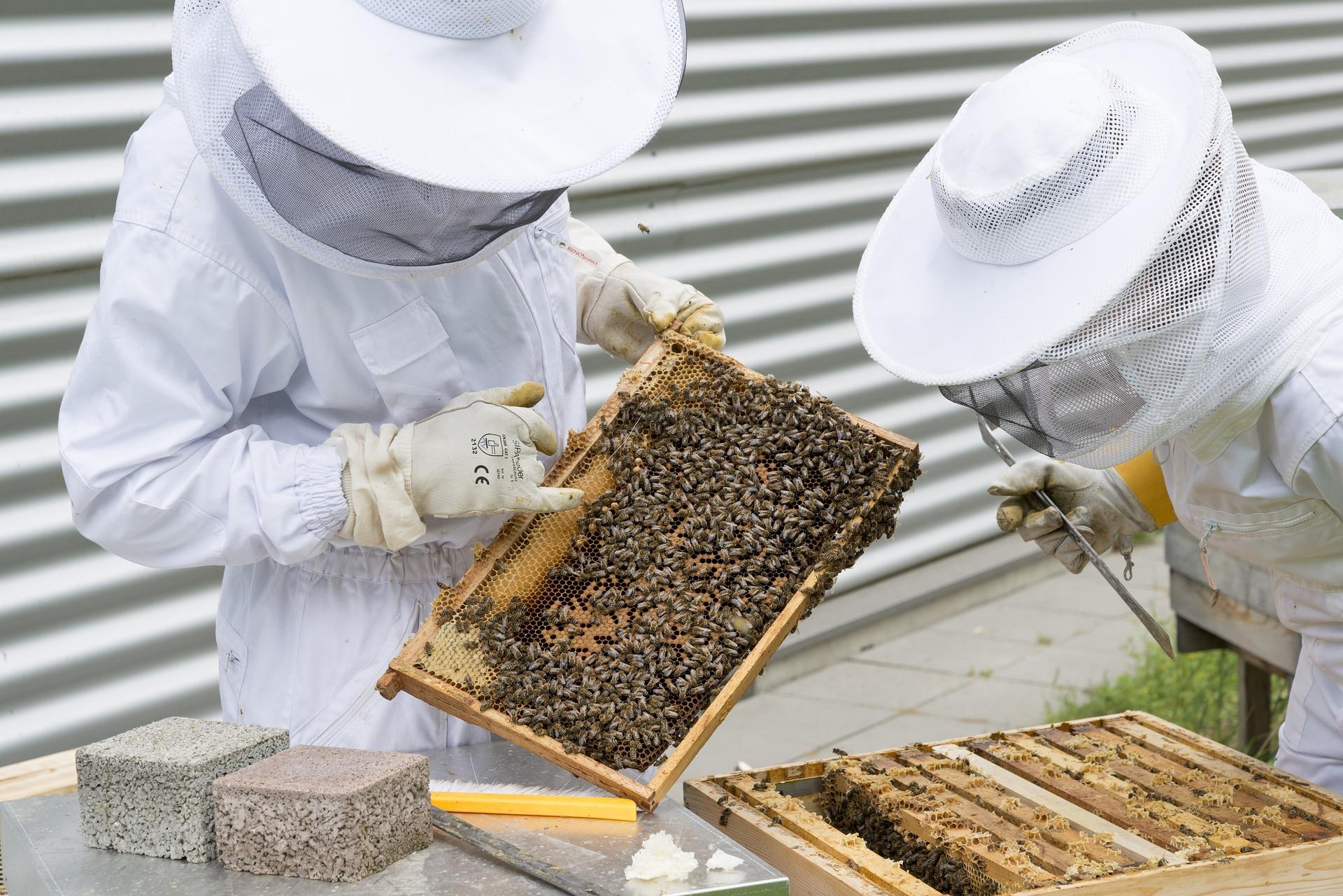 beekeeper 2650663 1920 - Agronomist.gr