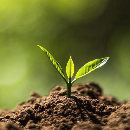 Επιλέγοντας το κατάλληλο χωράφι για την καλλιέργειά μου