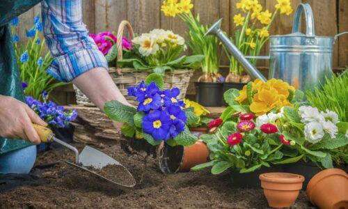 Πρακτική Κηπουρική