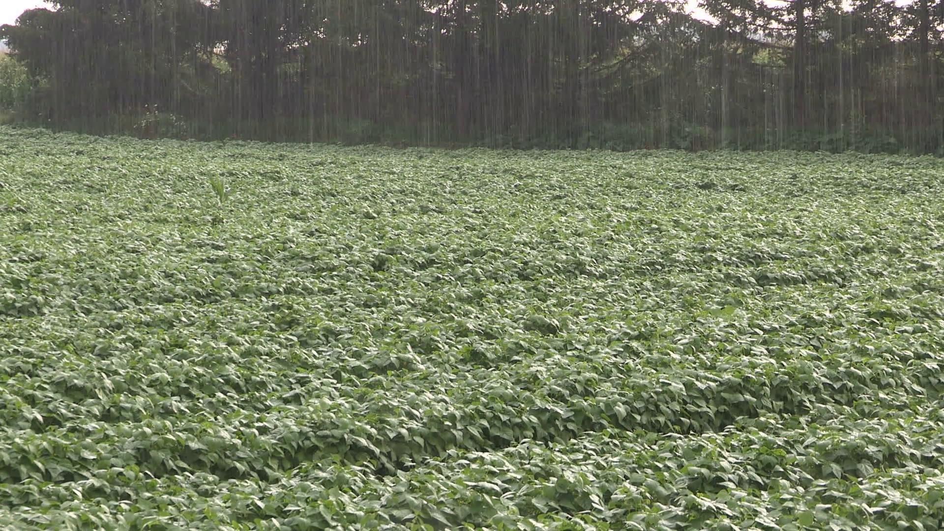 βροχή_και_καλλιέργειες