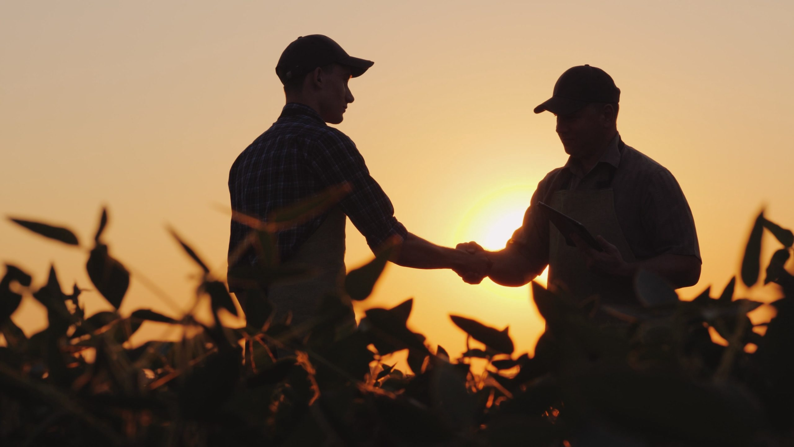 συμβολαιακή γεωργία scaled - Agronomist.gr