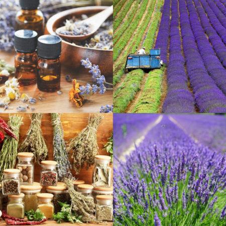Κατάρτιση στα Αρωματικά και Φαρμακευτικά Φυτά